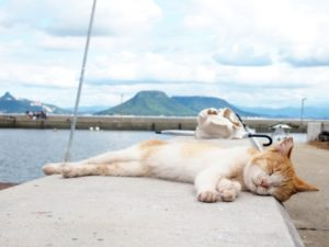 猫と日本の夏