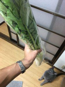 大根の葉っぱ
