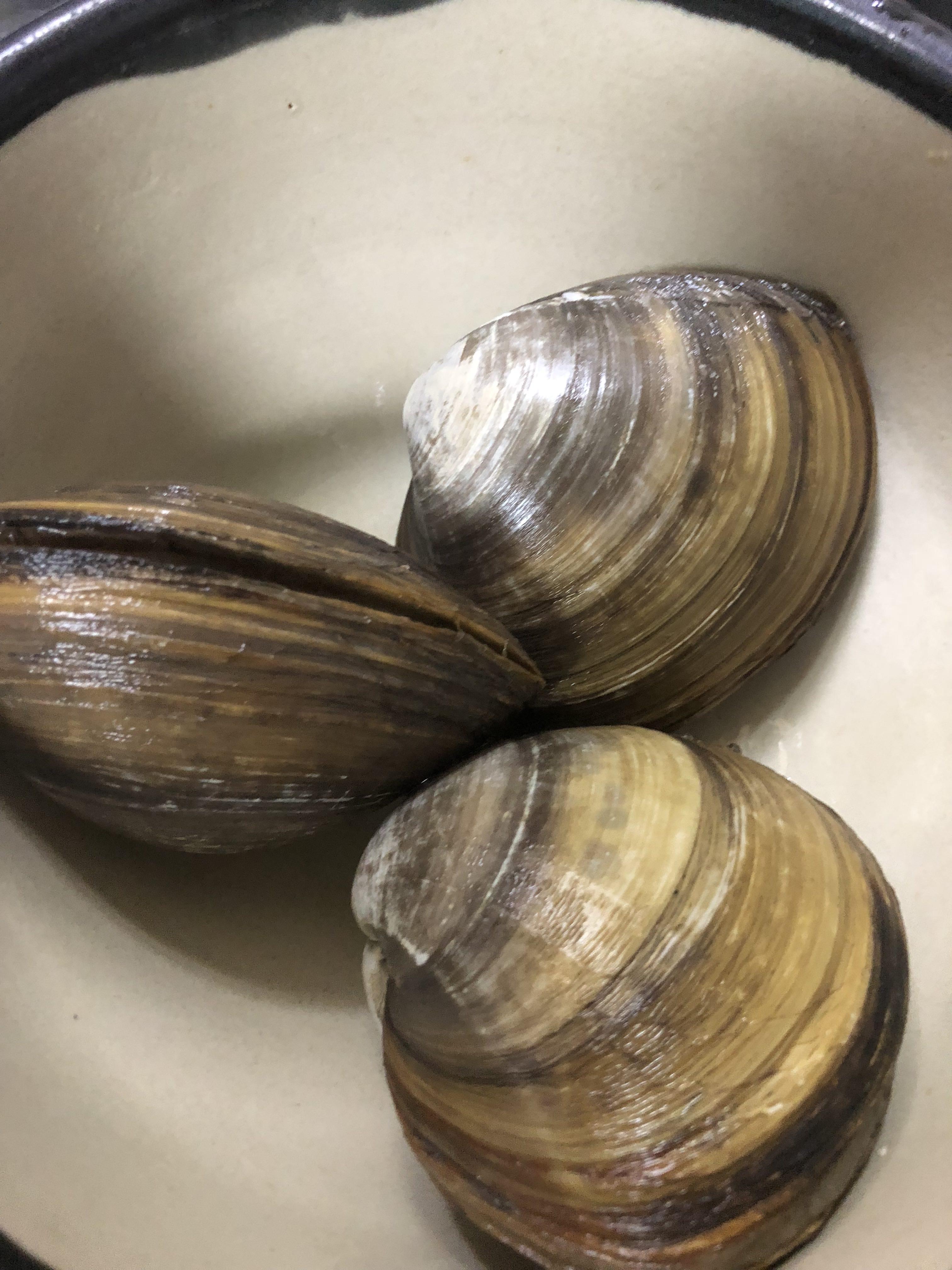 ホッキ貝のお刺身