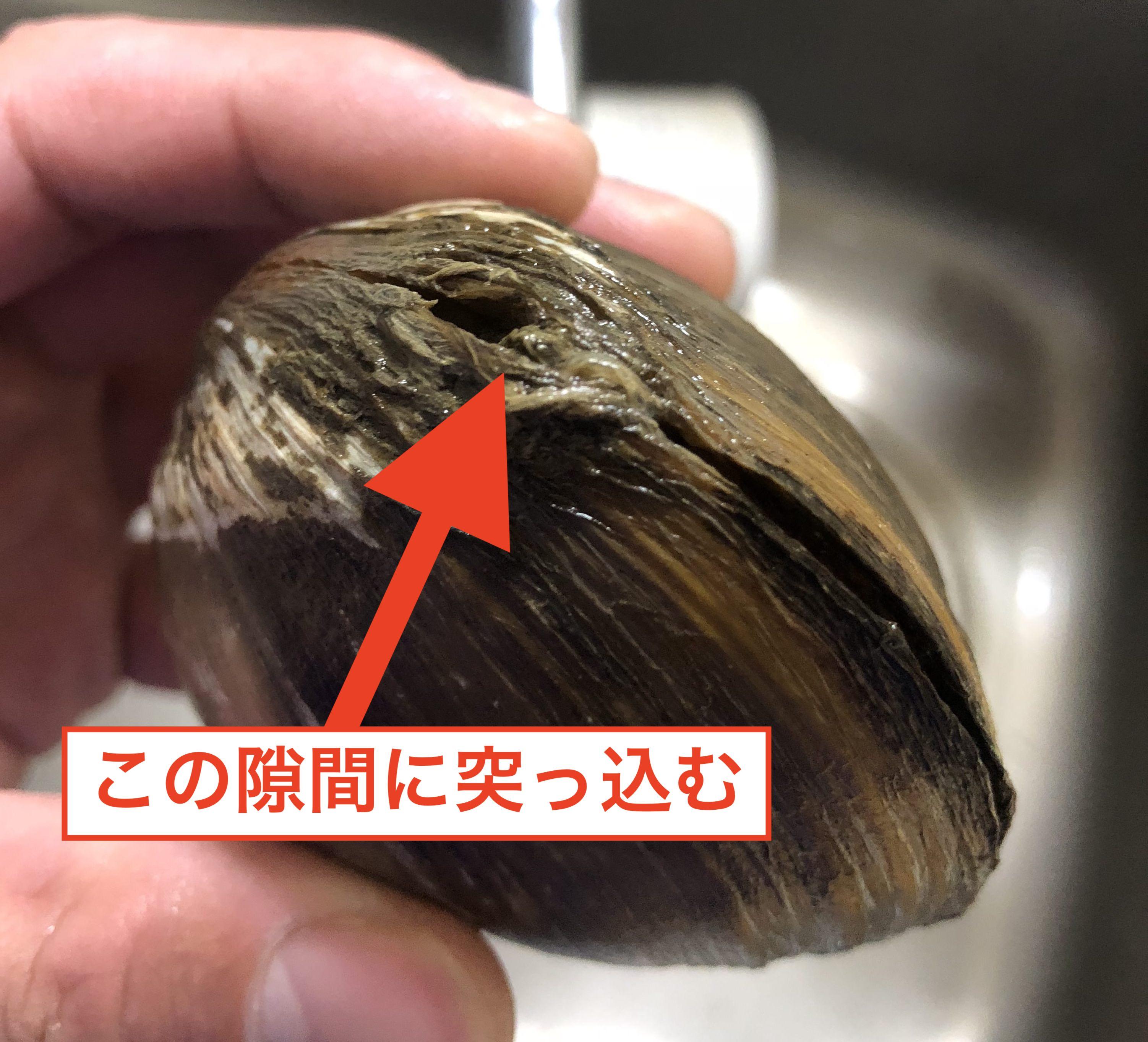 ホッキ貝の捌き方1