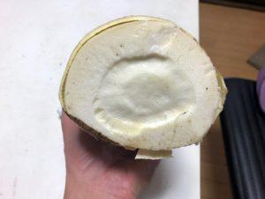真っ白な筍の切り取り部分