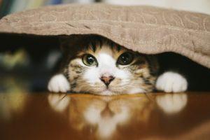 ペットはいつも飼い主の帰りを待っています